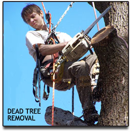 Tree Cutting - Dead Tree Removal